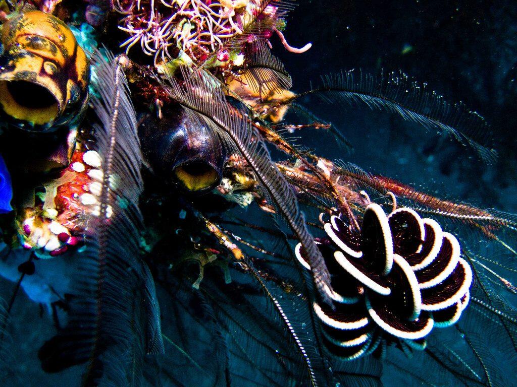 Reef Diving - Filter Feeders