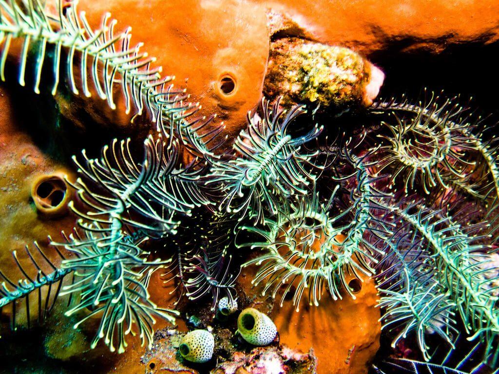 Scuba Diving Coral