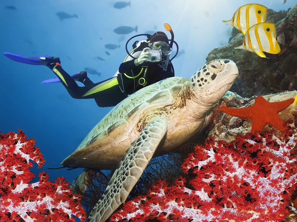 Scuba Diving with sea turles
