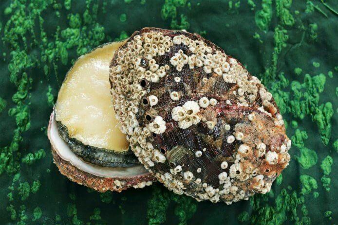 Fresh-Abalone