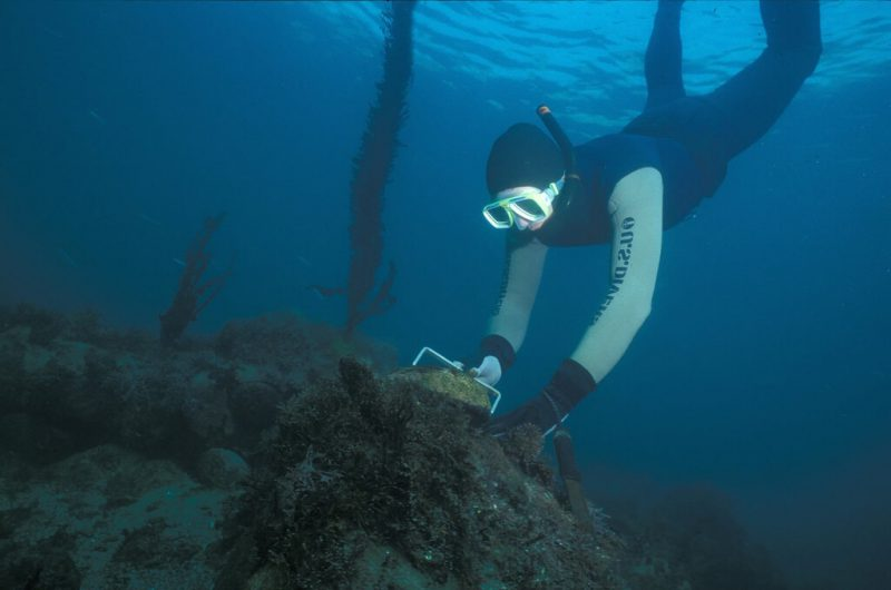Diving For Abalone